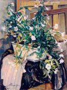Белые петунии. 2002 г.