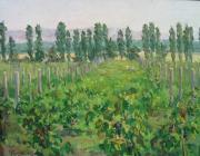 Виноградная долина