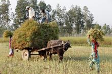 Индийские фермеры. Фото: Philippe Lissac / Godong / Global Look