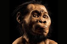 Homo naledi. Фото: Mark Thiessen / National Geographic / AP
