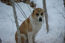 Фото с сайта http://sobaki.derev-grad.ru.