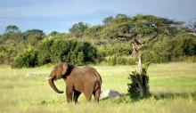 Слон в зимбабвийском нацпарке Хванге. Фото с сайта http://www.turinfo.ru.