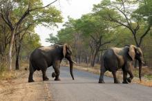 Африканские слоны в парке Хванге. Фото: Tsvangirayi Mukwazhi / АР