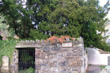 Фортингэльский тис. Фото: geograph.org.uk