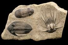Окаменелости со следами фауны девонского периода. Фото: Custom Life Science Images / Alamy / Diomedia