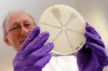 Работа над устойчивыми к антибиотикам бактериями. Фото: Suzanne Plunkett / Reuters