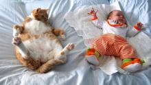 Фото с сайта http://animal-store.ru.