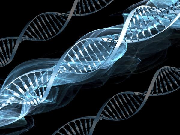 Специалисты наткнулись на ген, отвечающий за гениальность человека