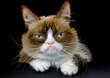 Сердитый Котик.