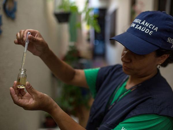 Ученые предлагают разрушение комаров— Вирус Зика