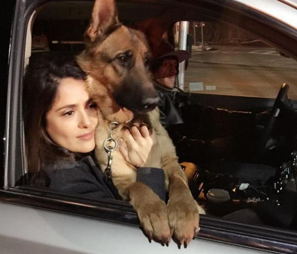 В США застрелили собаку актрисы Сальмы Хайек