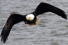 Фото: Kevin E. Schmidt / Quad-City Times / Zumapress / Globallookpress.com