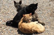 Фото: страница Amici dei gatti di Su Pallosu в Facebook