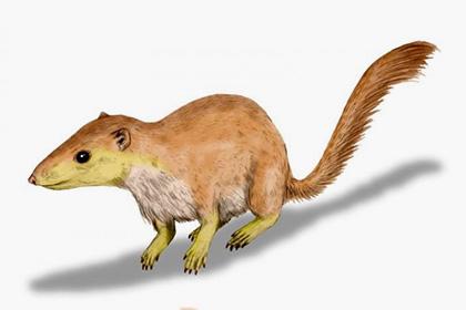 Млекопитающие начали захватывать Землю замиллионы лет доисчезновения динозавров
