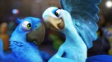 Голубые ара по имени Голубчик и Жемчужинка являются главными героями мультфильмов «Рио» и «Рио-2»
