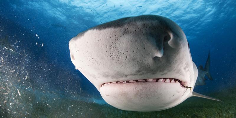 Винтернете появилось видео битвы акул