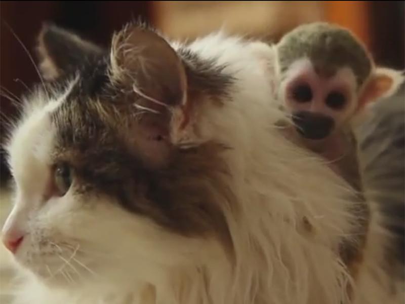 Усыновленную кошкой обезьянку назвали Федором