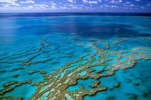 Большой Барьерный риф. Фото: William Chopart / MondImage / Globallookpress.com