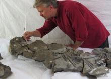 Окаменелые останки морской рептилии