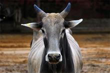 Фото: Vishal Bhatnagar / Zumapress / Globallookpress.com