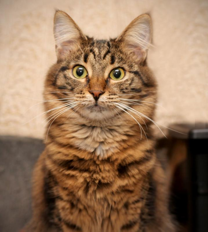 Генетики поведали историю распространения домашних кошек