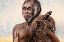 Реконструкция внешности H. floresiensis, сделанная по найденному скелету. Изображение: Peter Schouten