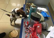 Пограничный пес «вынюхал» кокаин среди конфет. Фото с сайта mvs.gov.ua