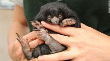 Фото: Paul Fahy / Taronga Zoo