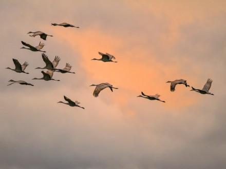 Глобальное потепление заставило перелетных птиц доэтого прилетать в близкие края