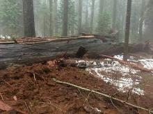 Фото: Calaveras Big Trees Association