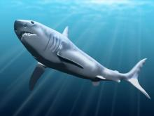 Акула мегалодон. Изображение: Nobu Tamura / Wikipedia