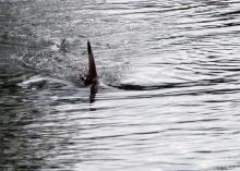 Фото с сайта kiwix.org