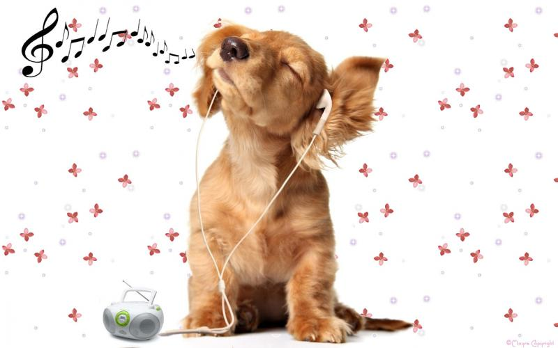 Шотландские ученые поведали олюбимой музыке собак