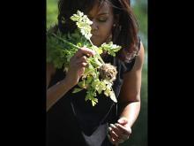 Мишель Обама в огороде возле Белого дома. Getty Images. Фото: А.Вонг