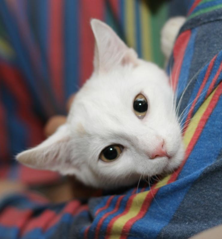 Кошки получают удовольствие отобщения с владельцами — Ученые