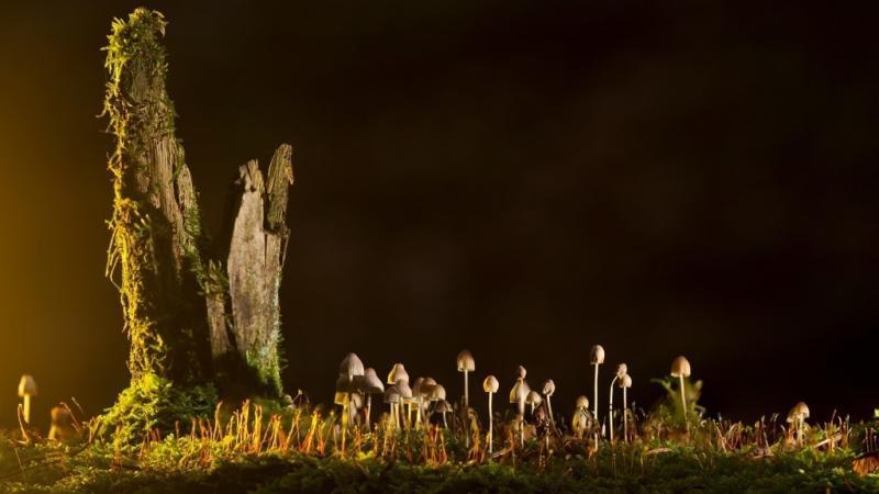 Ученые доказали, что грибы— самые древнейшие существа наЗемле