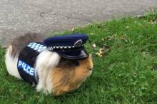 Фото: страница полиции Новой Зеландии в Facebook