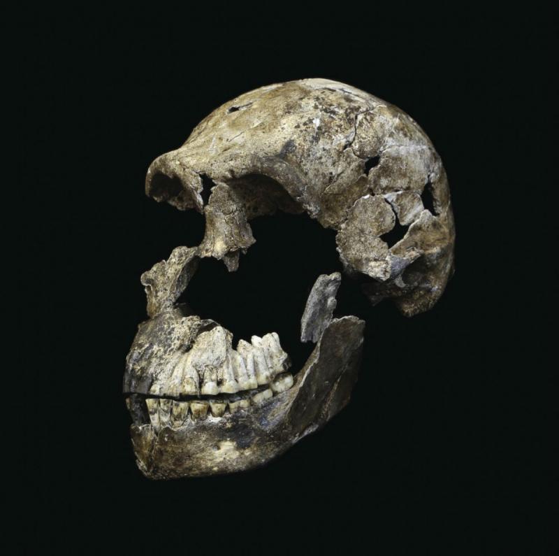 Археологи отыскали впещерах ЮАР необычайное кладбище предков человека Homo naledi