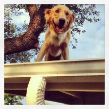 Фото: instagram.com/hucktheroofdog/