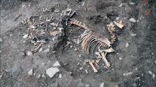Одно из животных захоронений в Саттон Фарм