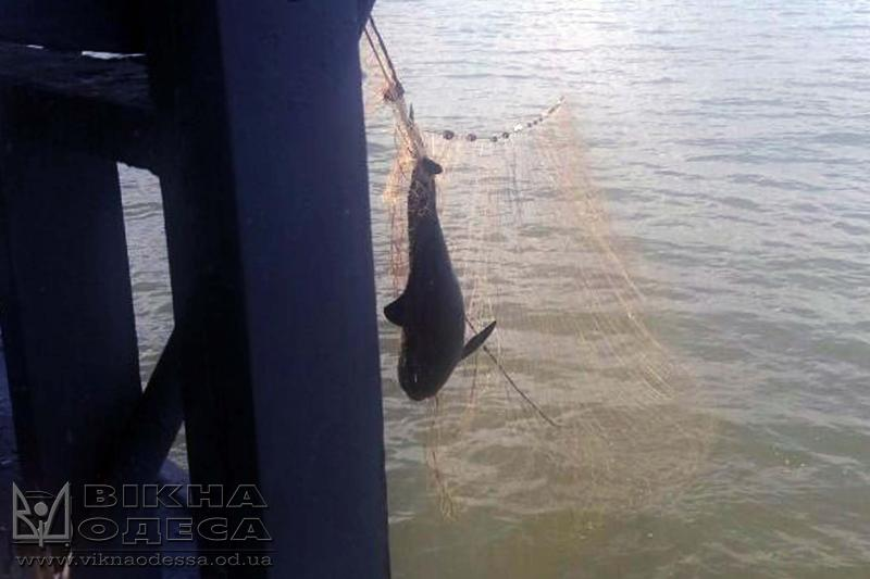 Таможенники отыскали 7 мертвых дельфинов, которые запутались всетях браконьеров