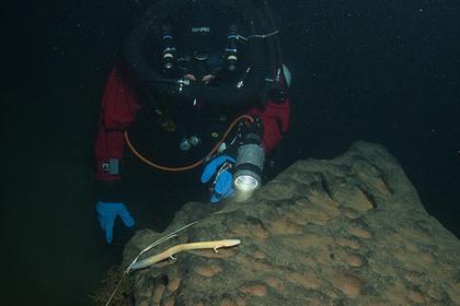 Учёные обнаружили «человеческую рыбу» нарекордной глубине вСловакии