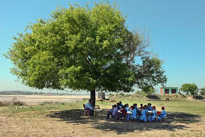 Граждане Индии высадили 66 млн деревьев заполдня