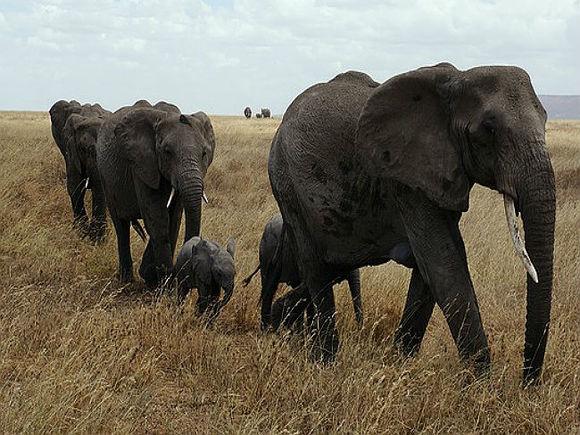 ВМС Шри-Ланки спасли двух слонов, унесенных в открытое море