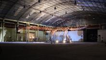 Фото : Museo Paleontologico Egidio Fergulio / D. Pol