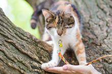 Слепая Малявка («Кошачье царство»). Фото Татьяны Стрельниковой