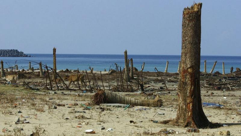 Ученые определили почерепу древнейшую жертву цунами, произошедшего 6 тыс. лет назад