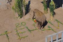 Фото Харьковского зоопарка