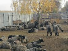 Фото: Animal-SOS-Odessa