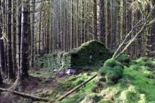 Фото: Forest and Land Scotland